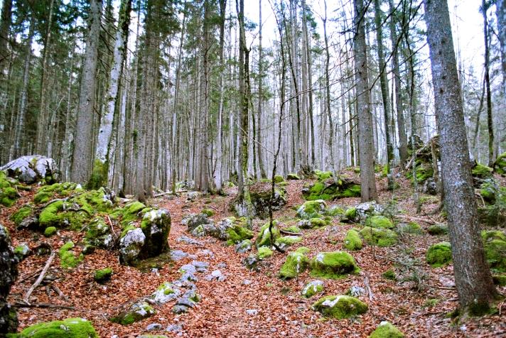 treesplease