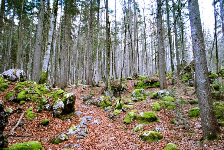 Slovenia is a dreamland, especially its beautiful Triglav National Park.